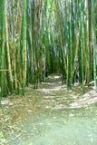 Trayectoria que camina en el bosque de bambú fotos de archivo libres de regalías