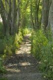 Trayectoria que camina en el bosque en un día soleado en el verano Imágenes de archivo libres de regalías