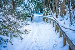Trayectoria que camina nevada en el bosque Foto de archivo