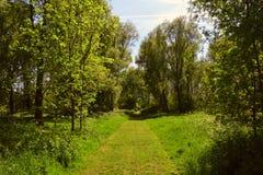 Trayectoria que camina soleada hermosa en el bosque/bosque en la primavera/el verano, abadía de Waltham, Reino Unido Imágenes de archivo libres de regalías