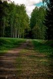 Trayectoria que lleva en el bosque Fotografía de archivo