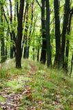 Trayectoria que lleva a través del bosque Imagenes de archivo
