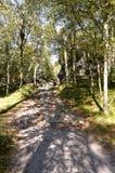 Trayectoria que va entre un bosque denso y rocoso imagen de archivo