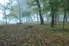 Trayectoria recta cubierta con las hojas caidas en bosque de niebla Foto de archivo libre de regalías