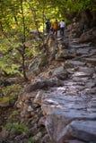 Trayectoria rocosa en luz del sol del tiempo del día de los árboles de la montaña Imagen de archivo libre de regalías
