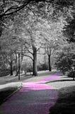 Trayectoria rosada Fotografía de archivo libre de regalías