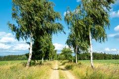 Trayectoria rural con los árboles de abedul al lado de prados Fotos de archivo libres de regalías