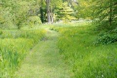 Trayectoria segada del jardín con los ranúnculos amarillos Fotografía de archivo