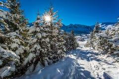 Trayectoria soleada de la montaña en invierno Fotos de archivo