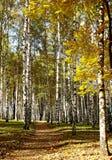Trayectoria soleada del otoño en el bosque Imagen de archivo libre de regalías