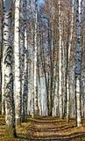 Trayectoria soleada en el bosque de octubre del otoño Imagenes de archivo