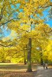 Trayectoria soleada en parque Fotos de archivo libres de regalías