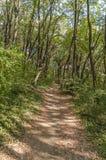Trayectoria sucia del suelo verde del bosque para el carril que camina y de funcionamiento Imagenes de archivo