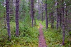Trayectoria a través de árboles en bosque Fotos de archivo