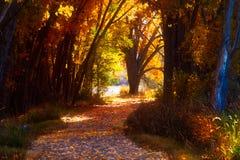Trayectoria a través de Autumn Colors fotografía de archivo