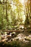 Trayectoria a través de Forest With No People hermoso Foto de archivo
