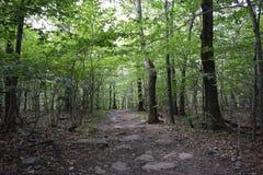 Trayectoria a través de Forest Woods Imágenes de archivo libres de regalías
