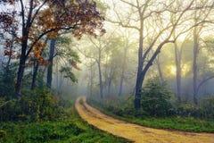 Trayectoria a través de Forest Woods de niebla Imágenes de archivo libres de regalías