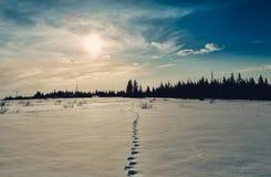 Trayectoria a través de la nieve Imagen de archivo
