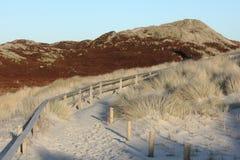 Trayectoria a través de las dunas en la luz de la tarde Foto de archivo libre de regalías