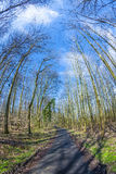 Trayectoria a través de un bosque con los árboles desnudos en invierno Imagenes de archivo