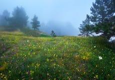 Trayectoria a través de un bosque viejo oscuro misterioso en niebla Fotos de archivo