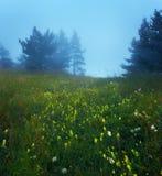 Trayectoria a través de un bosque viejo oscuro misterioso en niebla Fotografía de archivo libre de regalías