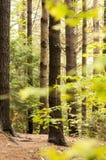 Trayectoria a través del bosque Fotos de archivo