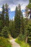 Trayectoria a través del bosque en cielo grande Fotos de archivo