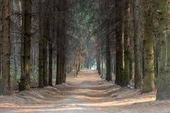 Trayectoria a través del bosque en un día de Suny ucrania Imagen de archivo libre de regalías
