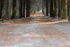 Trayectoria a través del bosque en un día de Suny ucrania Foto de archivo libre de regalías