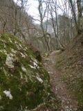 Trayectoria a través del bosque, hojas caidas en la tierra, rocas de la piedra y de la tierra cubiertas con el musgo, reservado,  fotografía de archivo