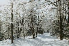 Trayectoria a través del bosque para el esquí de fondo Foto de archivo