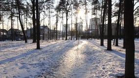 Trayectoria a través del bosque siberiano del invierno debajo de la nieve almacen de metraje de vídeo