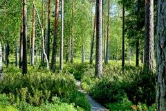 Trayectoria a través del bosque verde en el verano Foto de archivo libre de regalías