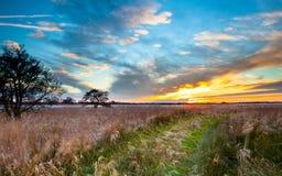 Trayectoria a través del campo de lámina en la puesta del sol Fotografía de archivo libre de regalías