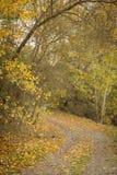 Trayectoria a través del campo por completo de hojas amarillas Imagenes de archivo
