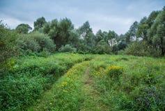 Trayectoria a través del campo y del bosque Fotos de archivo libres de regalías