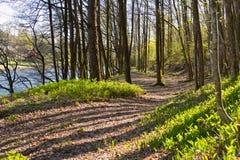 Trayectoria a través del piso verde del bosque al lado del río salmonero Tovdalselva, en Kristiansand, Noruega Foto de archivo