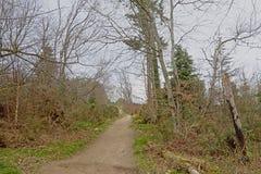 Trayectoria a trav?s de un bosque mezclado del invierno en la colina de Montpelier, Dubl?n fotografía de archivo