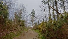 Trayectoria a trav?s de un bosque mezclado del invierno en la colina de Montpelier, Dubl?n imagenes de archivo