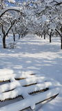 Trayectoria a través de una huerta nevada Fotografía de archivo