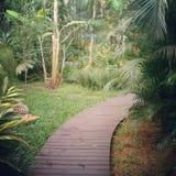 Trayectoria tropical del jardín, Ilhabela, el Brasil Foto de archivo