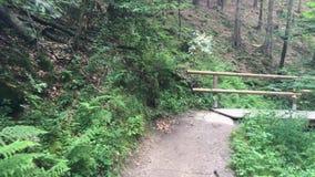 Trayectoria turística en el bosque entre las rocas y el verde hermoso Parque nacional de Checo Suiza, rocas grandes metrajes