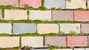 Trayectoria y musgo del jardín Imagen de archivo libre de regalías