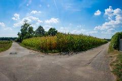 Trayectorias Asphalt Route Decision de divergencia del campo de maíz dos Imagen de archivo libre de regalías
