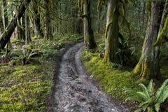 Trayectorias de bosque Foto de archivo