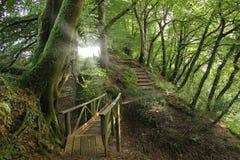 Trayectorias de bosque, Inglaterra Imagen de archivo libre de regalías