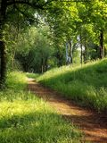 Trayectorias de bosque para caminar y activar fotos de archivo