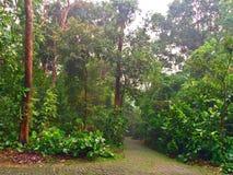 Trayectorias de bosque solas Imágenes de archivo libres de regalías